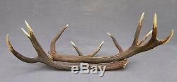 Shed Wild Red Deer Antler Set Pair (horn, Knife, Carving, Chew, Taxidermy)